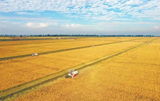 致富项目农村——农村稀有种植项目,早做早致富!