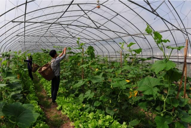 11个农村家庭种植致富好项目,总有一个适合你!