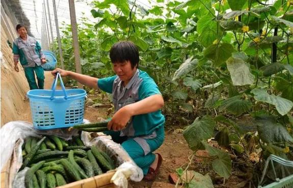 适合农村创业的项目——如何创业2020年适合农村创业好项目,不起眼小生意,未来三年值得入门